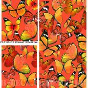 papillons corail