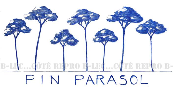 PP02 Pin parasol